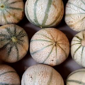Petit Melon (Bio) 500gr