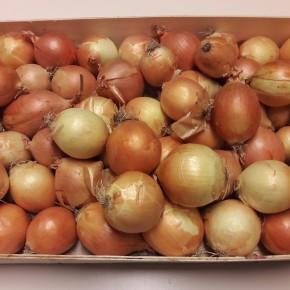 Oignon jaune (Bio) 500gr
