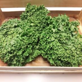 Salade (Bio)