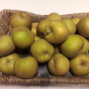 Pomme Reinette grise 1Kg