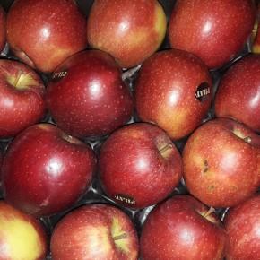 Pomme Braebrun 1Kg