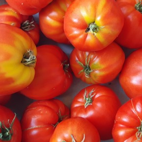 Tomate Cœur de bœuf (Bio)...