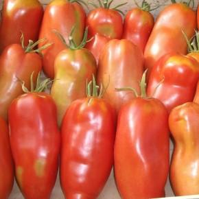 Tomate Cornue des andes...